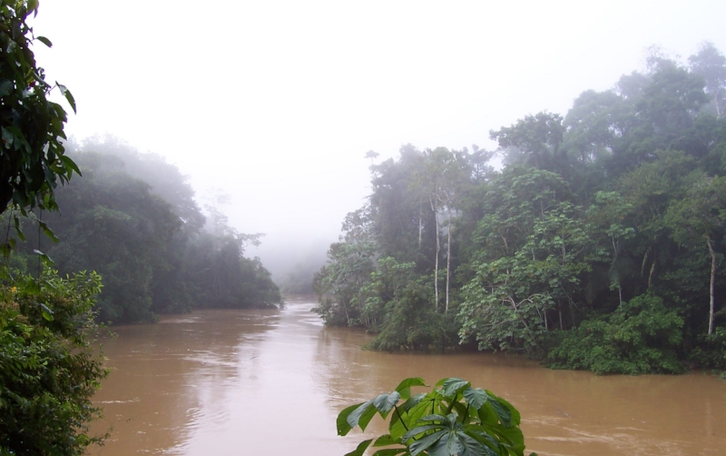 We will go during high water season to maximize the chances of finding mammals and the monkey, and because navigating dense rain forest is easier by boat than on foot.    During high water season the rivers can become 50-feet deep.