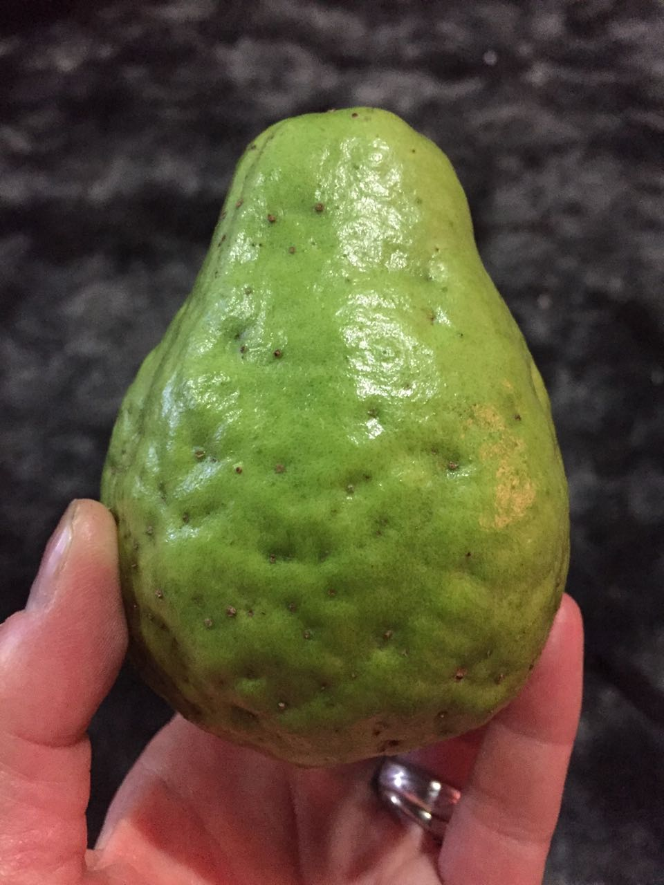 Gigantic guava!