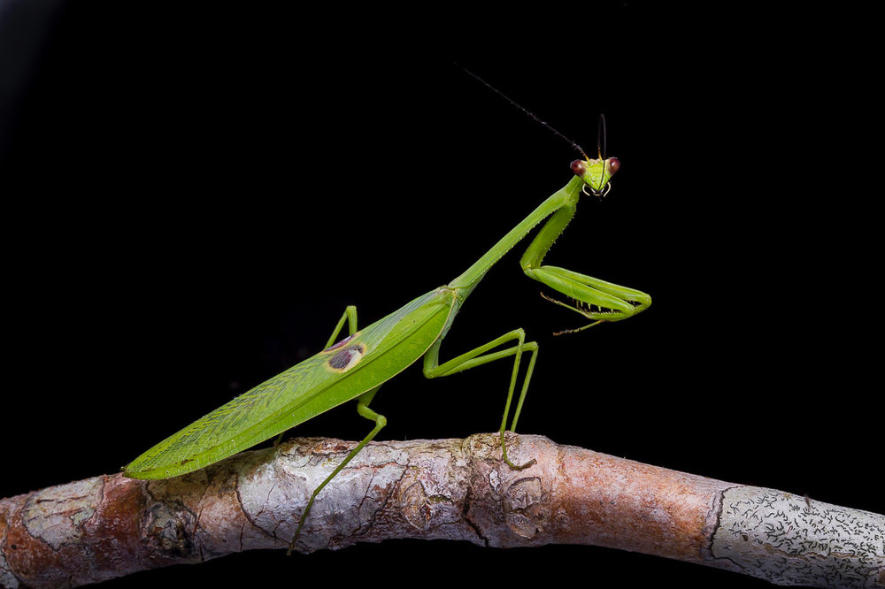 Not just any praying mantis: Research Palace visitor