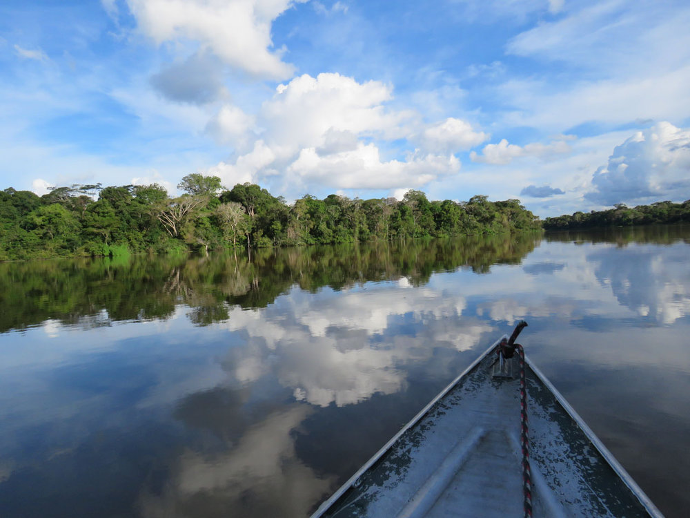 To conduct surveys on igarapes (small streams) or in igapo (black water) or varzea (white water) flooded forest, we used small boats or handmade canoes with paddles.