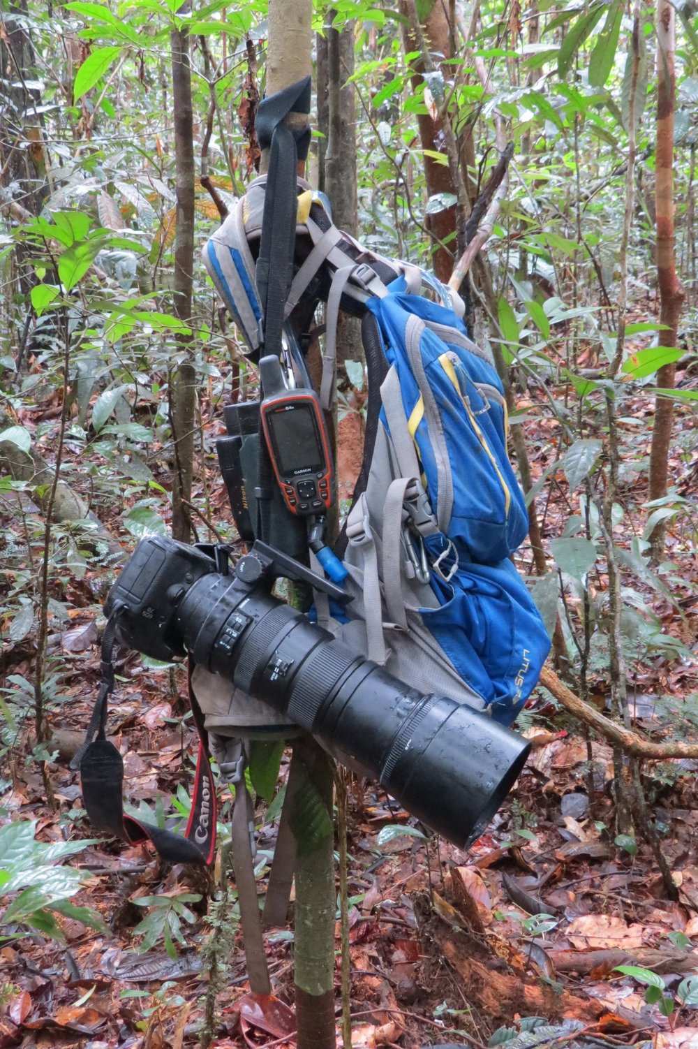 Just some of the gear our DP would bring with him in the field. Along with the drone and camcorder, he often brought his still Nikon camera, binoculars and a GPS unit. We would hang our gear in small saplings to keep ants from getting in it. Photo by Ivan Batista.