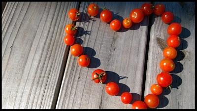 Garden on Marais tomatoes
