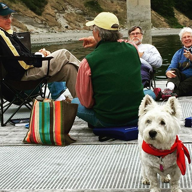 First-ever meetup of the West Coast Moody Sailboat contingent kicks off with a picnic on the dock. Georgie, club mascot, doesn't even like the water but came down from Victoria, B.C. on a #Moody 36. FOUR boats actually made it! #summer #sailing #sailingseason #weekend #boat #wanderlust
