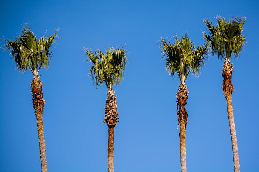 Trees Santa Cruz.jpg