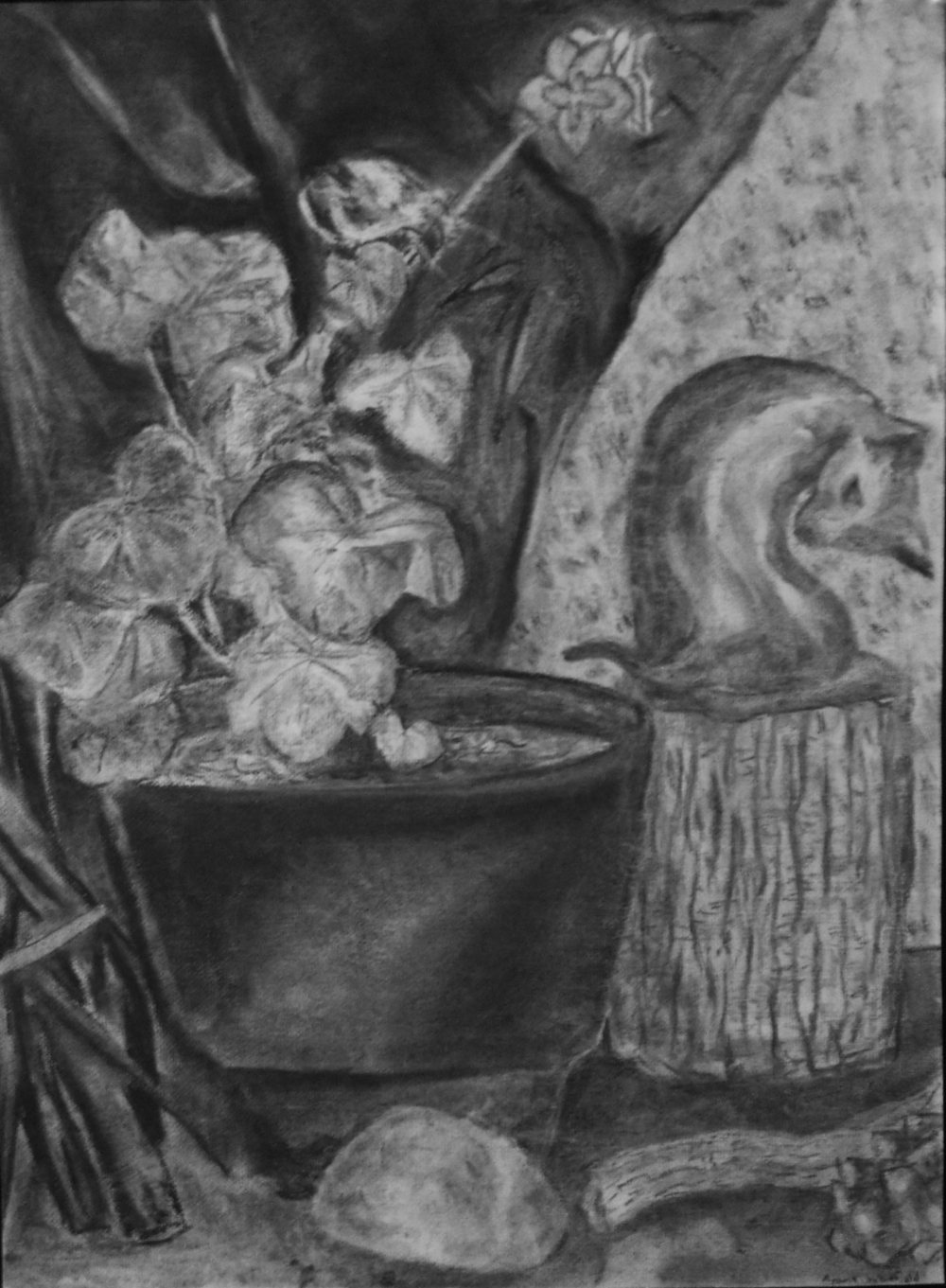 Bronze Cat (charcoal) - Ayame Whitfield