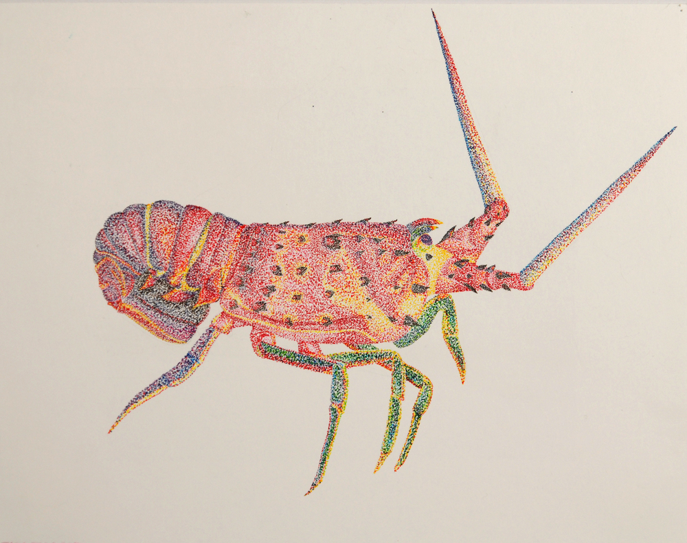 Lobster (colored pencil) - Tara Talland