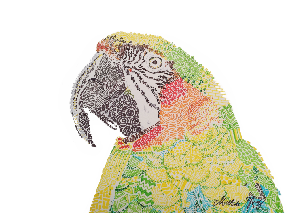 Parrot (colored pencil) - Michelle Zhang