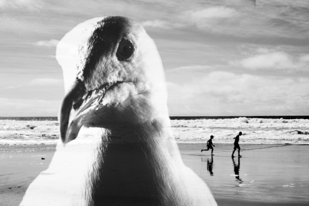 Seagull - Alison Saparoff