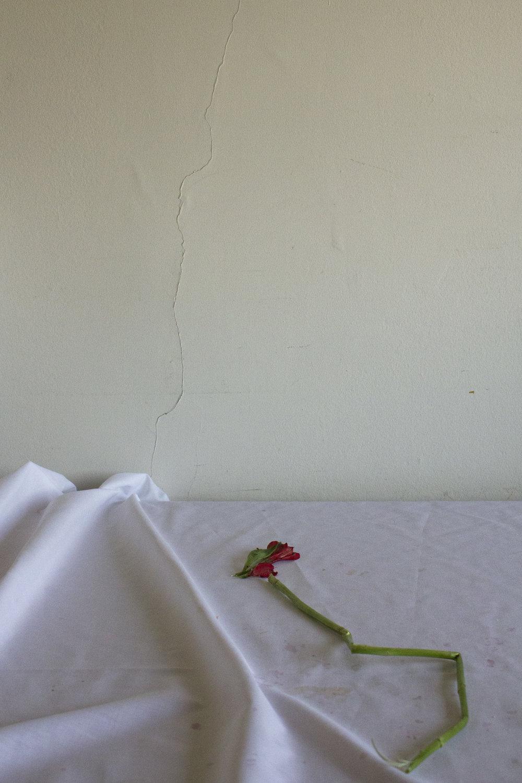 Laura Letinsky Broken Flower - Claudia Inglessis