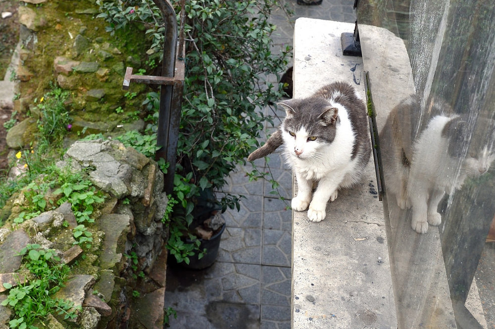 A cat at the Torre Argentina Cat Sanctuary