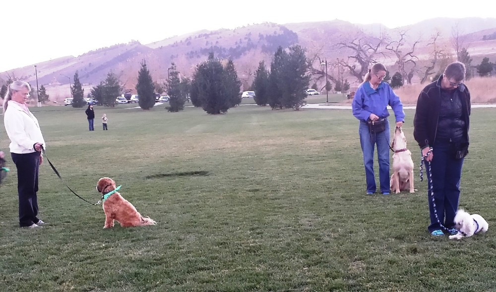 Outside Group dog training classes familiarize dogs to outside distractions