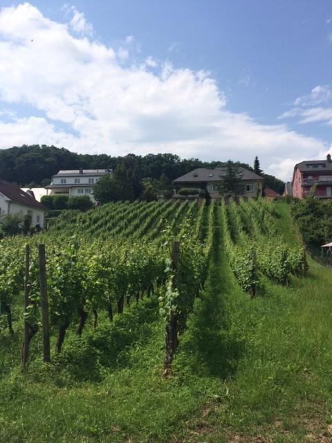 Luxembourg vineyard