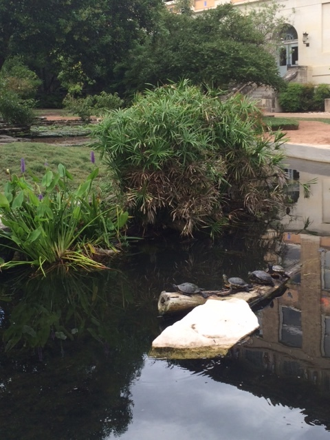 Turtles at the University of Texas Austin