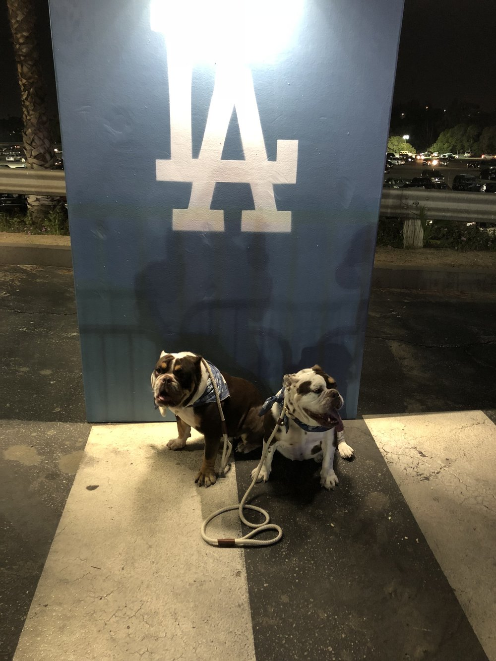 LA Dodgers bulldogs