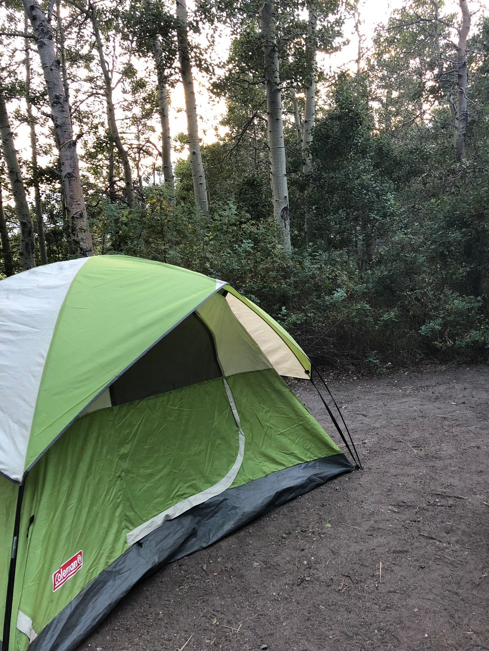 Coleman 4-person tent