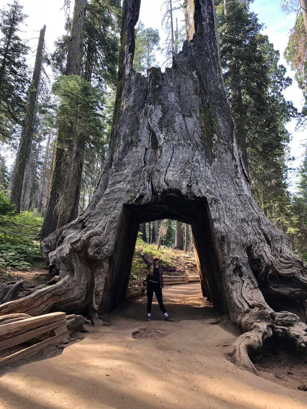 Sequoias at Yosemite