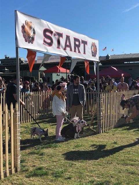 Santa Anita Bulldog Derby