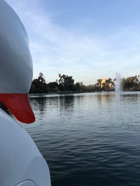 Echo Park Lake swan boats