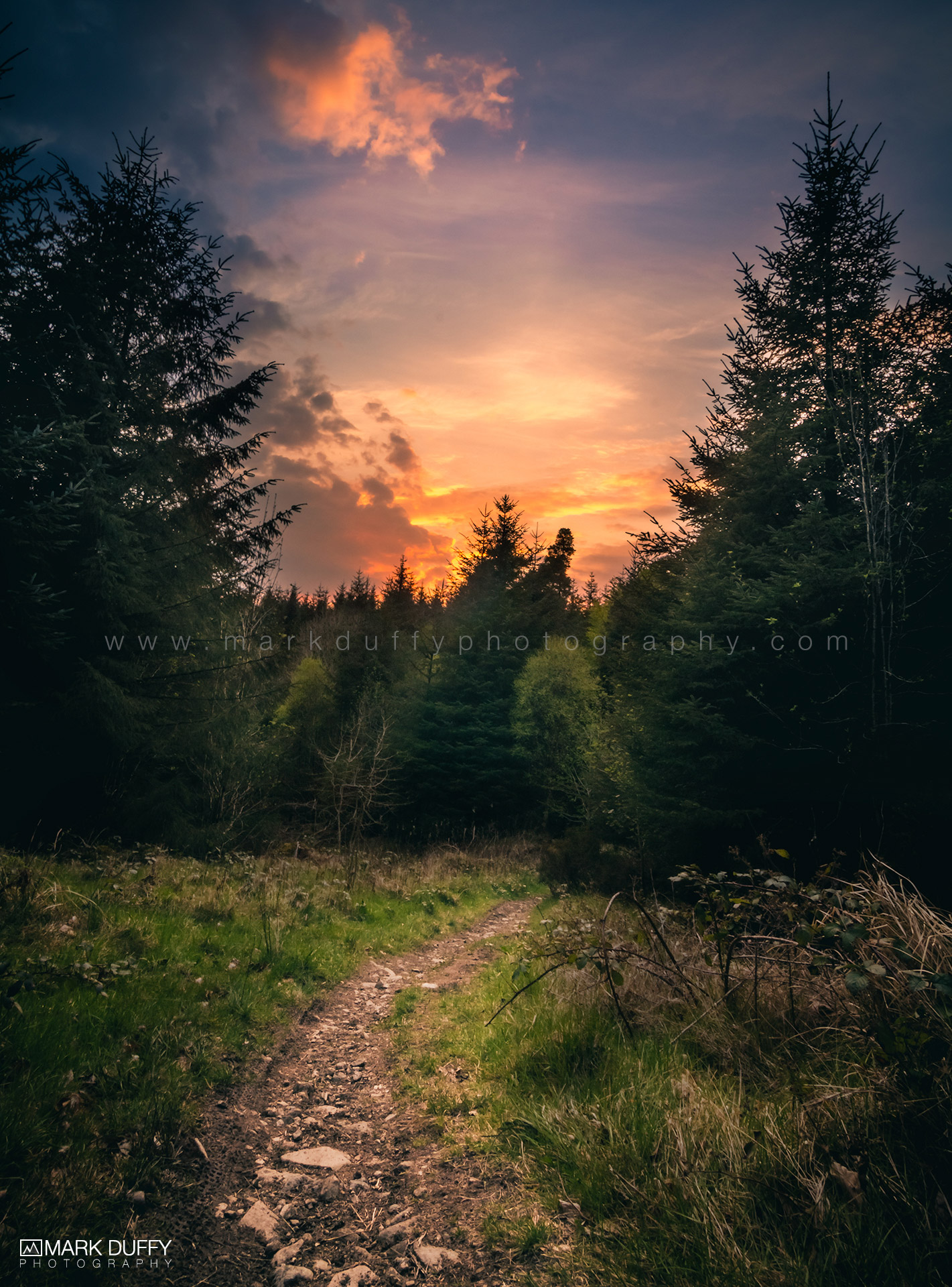 Forest Sunset Landscape Photography