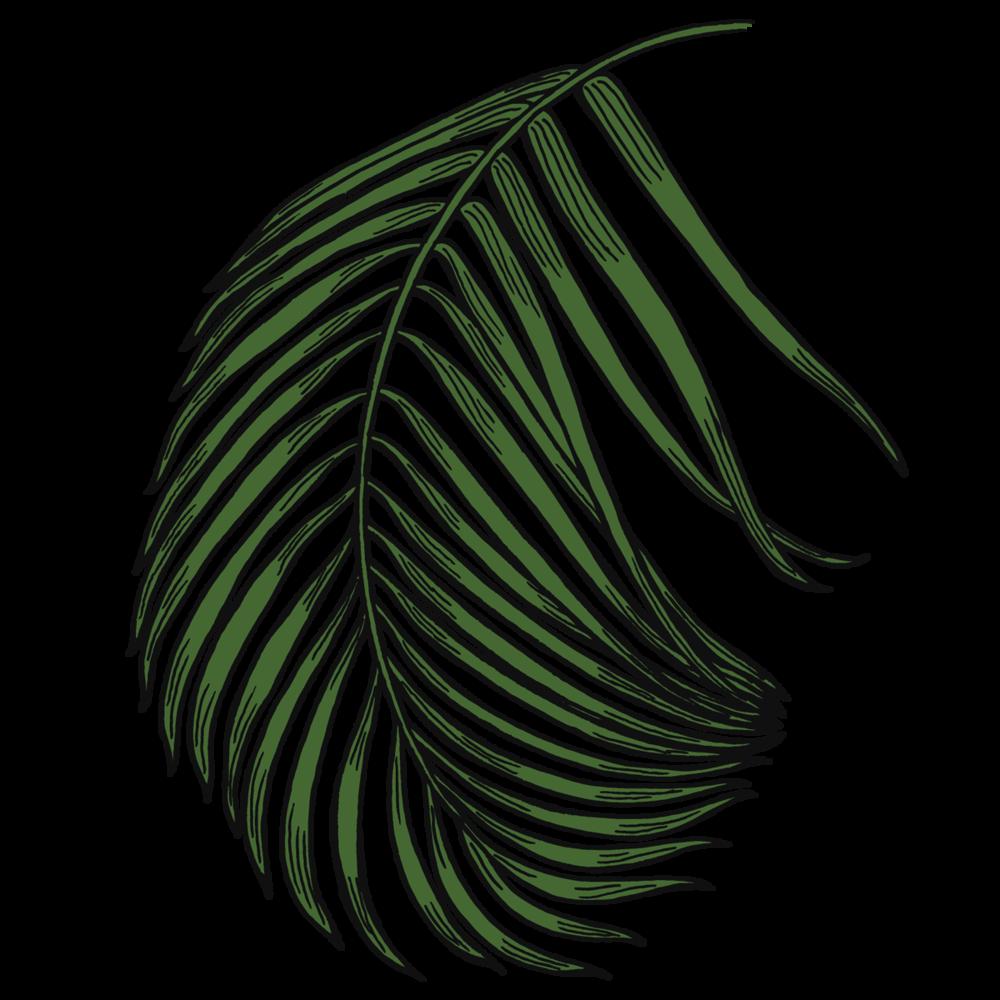 fern2.png
