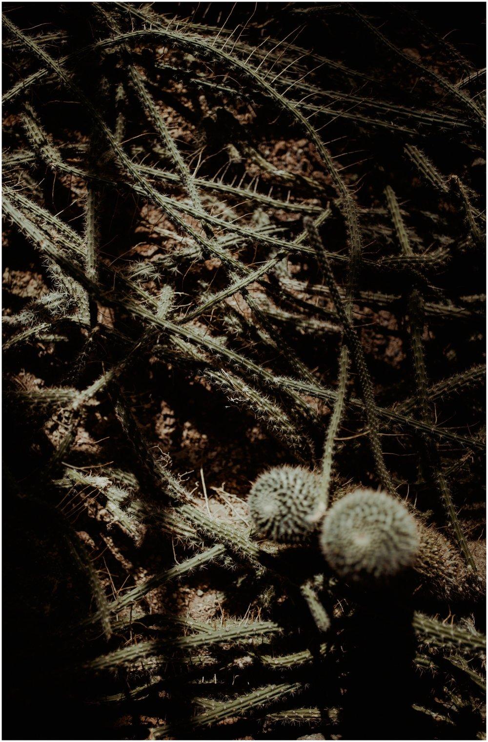 phoenix-lifestyle-photographer-trip-to-boyce-thompson-arboretum_0009.jpg