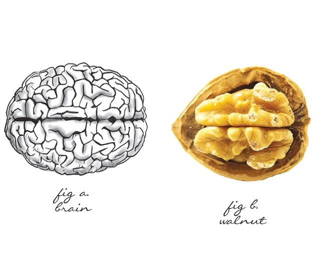 Walnut Picture