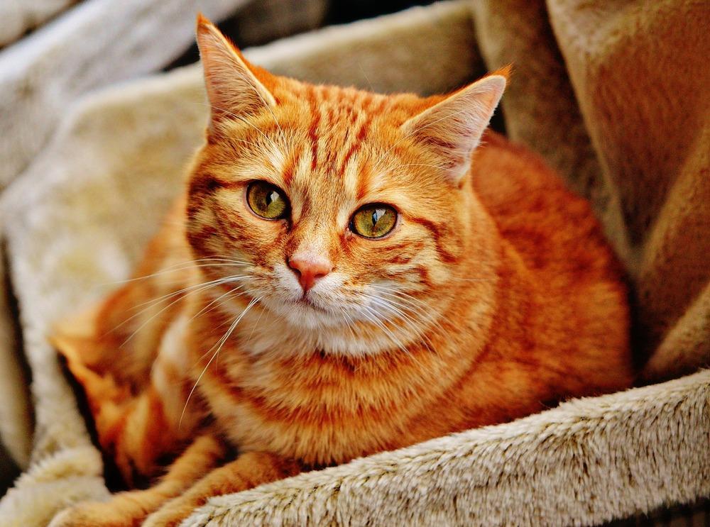 cat-1046544_1920.jpg