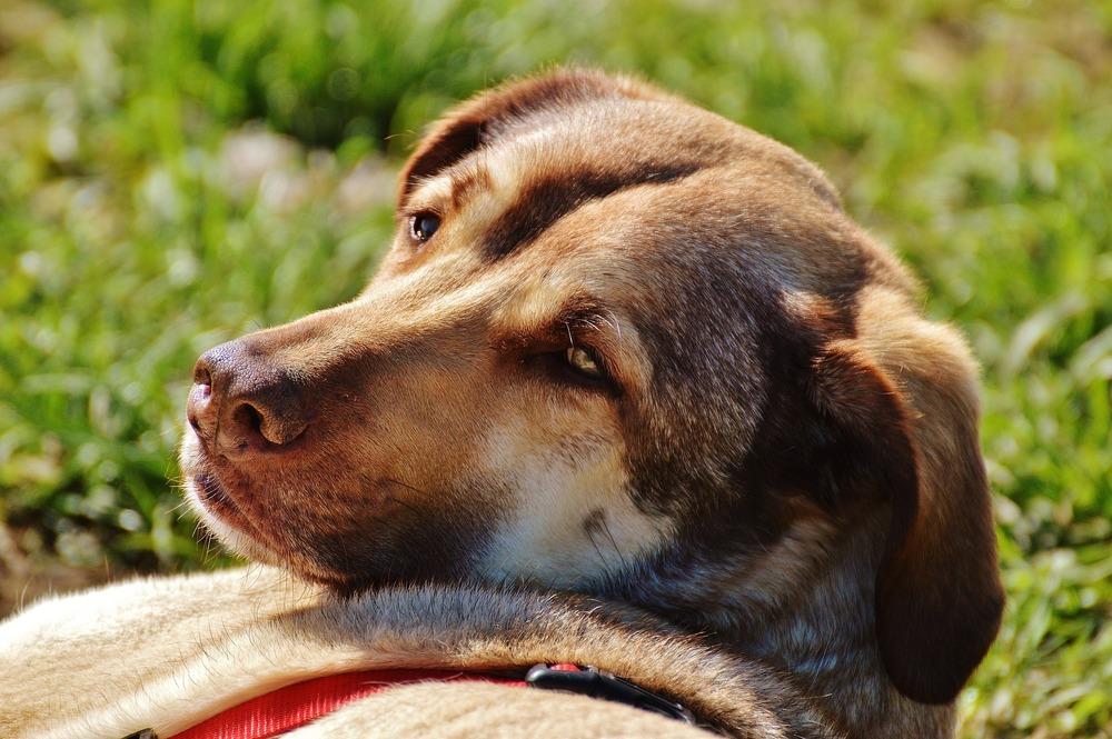 dog-1344792_1920.jpg