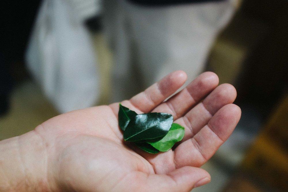 lao-food-houston-kaffir-leaves