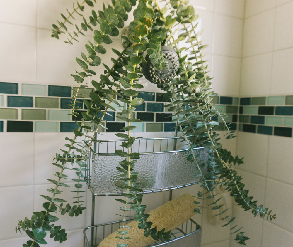 One of my favorite things to do is grab a bunch of eucalyptus from the farmer's market and hang them in my shower for a DIY smelly shower! Eucalyptus is known to stimulate the brain, reduce inflammation, and naturally decongest the sinuses! It smells absolutely amazing! Self-care doesn't have to be expensive, just creative :) enjoy!