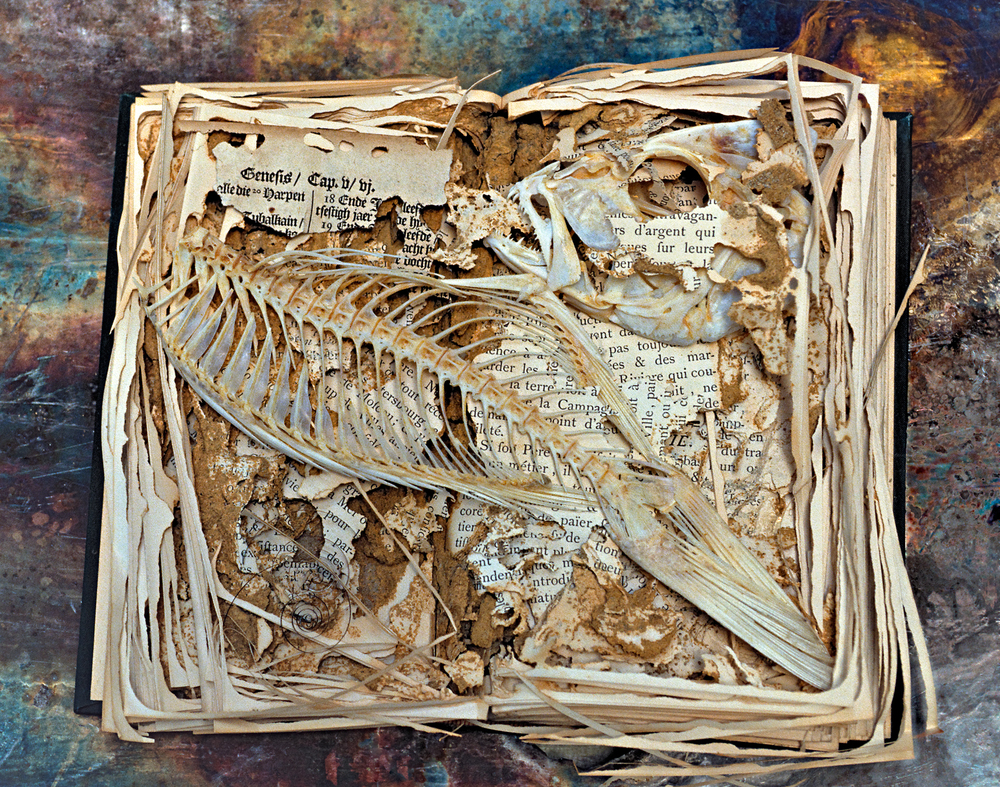 Termite eaten book, Museum of Comparative Zoology, Harvard University. with fish added.
