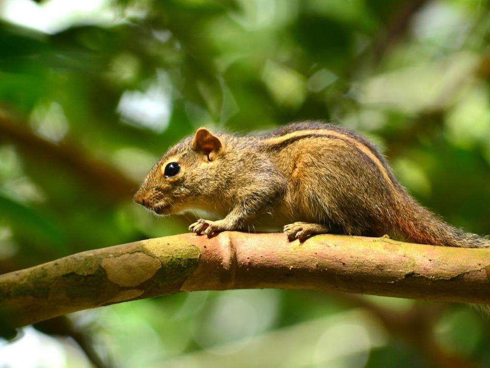 squirrel-246861_1280.jpg