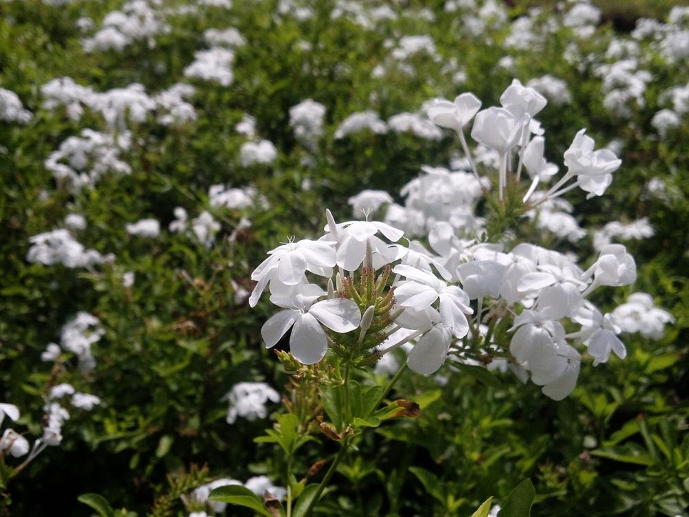 white-177003_1920.jpg