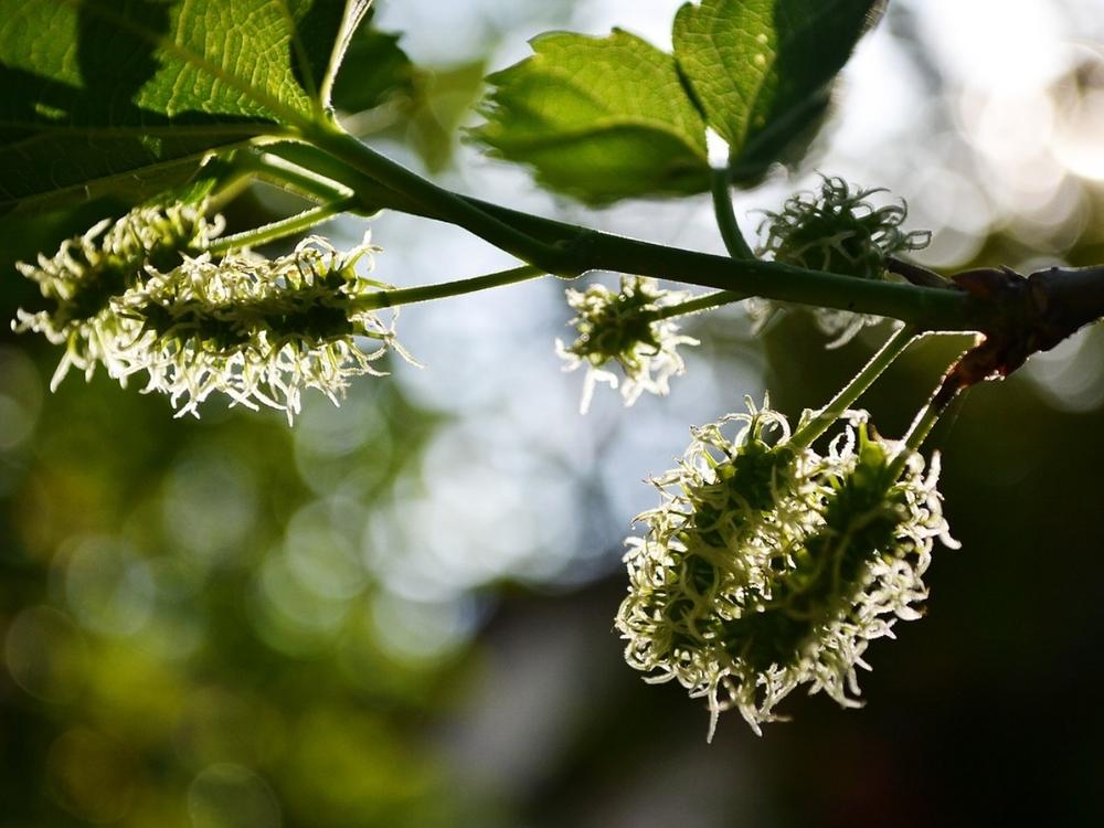 berries-213812_1280.jpg