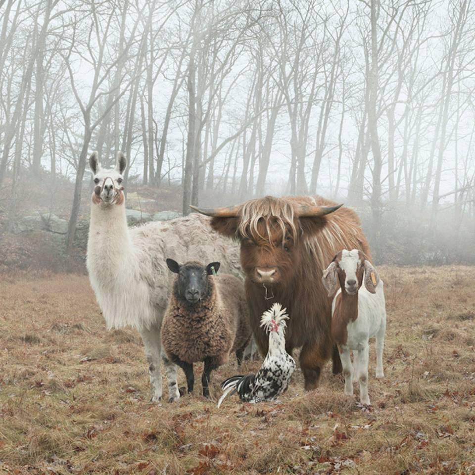 Rob MacInnes 'Farm Family'