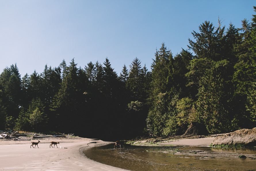 Olympic National Park Photo-62