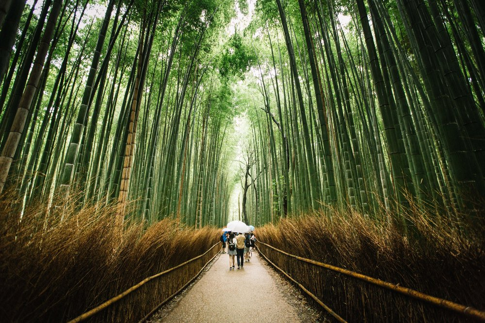 Kyoto Bamboo Forest-1.jpg