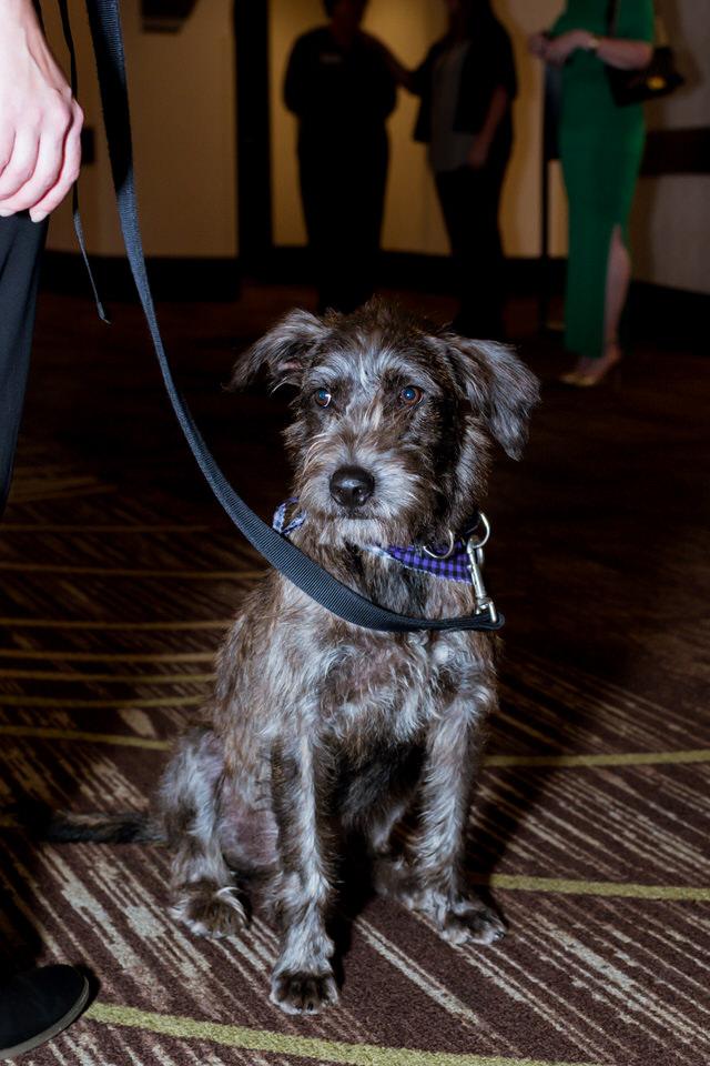 Kitsap Humane Society Animal Krackers 2018 Gala Christina Servin Photographs-40.jpg