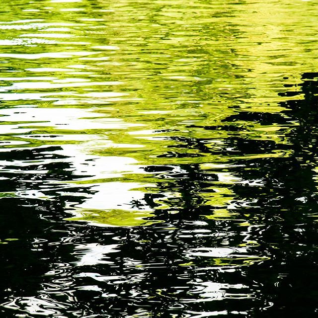 Green. Water reflections on The Lake (Central Park, NYC). July 3rd, 2017.