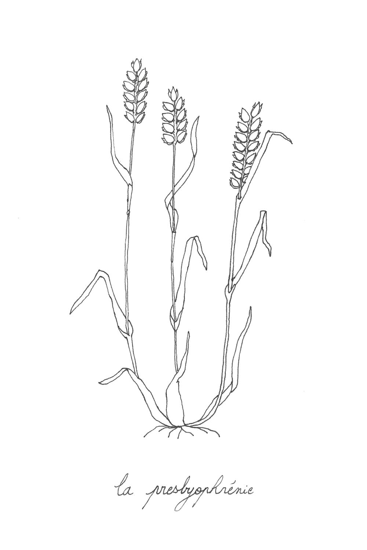 48 un blé- la presbyophrénie.png