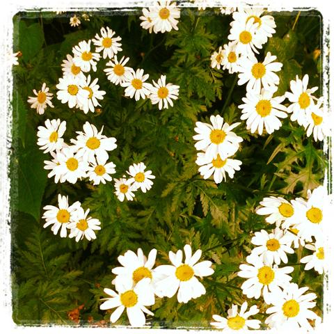 Garden Museum Flowers