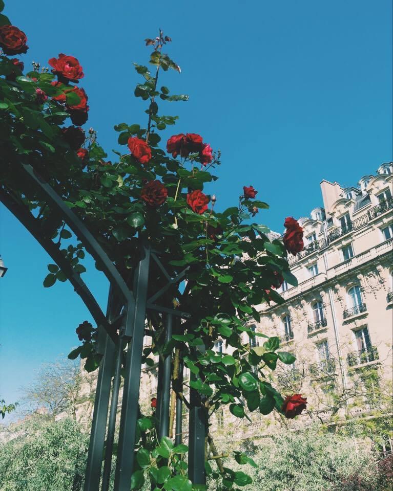 The roses on Boulevard Pereire, Paris 17