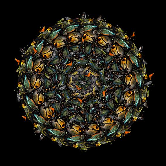 Quickening by Fleur Alston