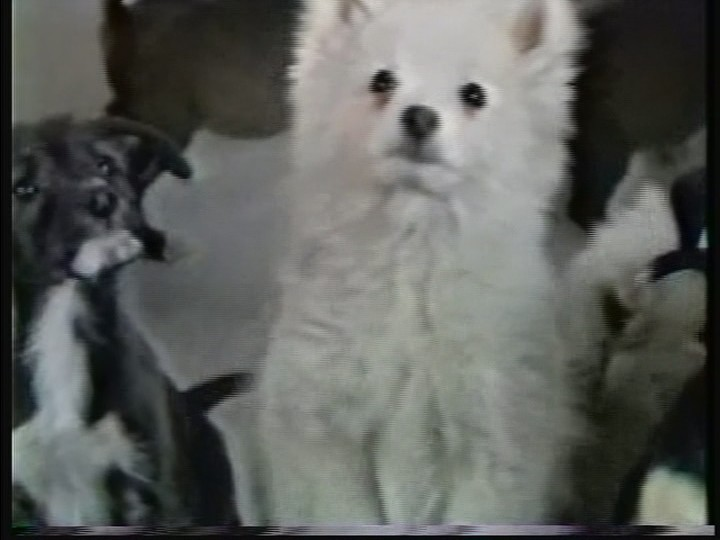 WHYT Radio Puppies Commercial Screenshot 1.jpg