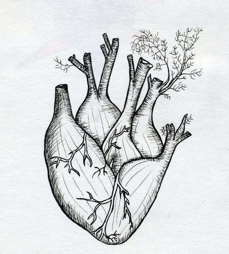 FENNELHEART.jpg