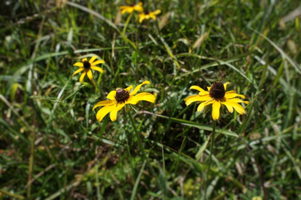 closeup flowers.jpg