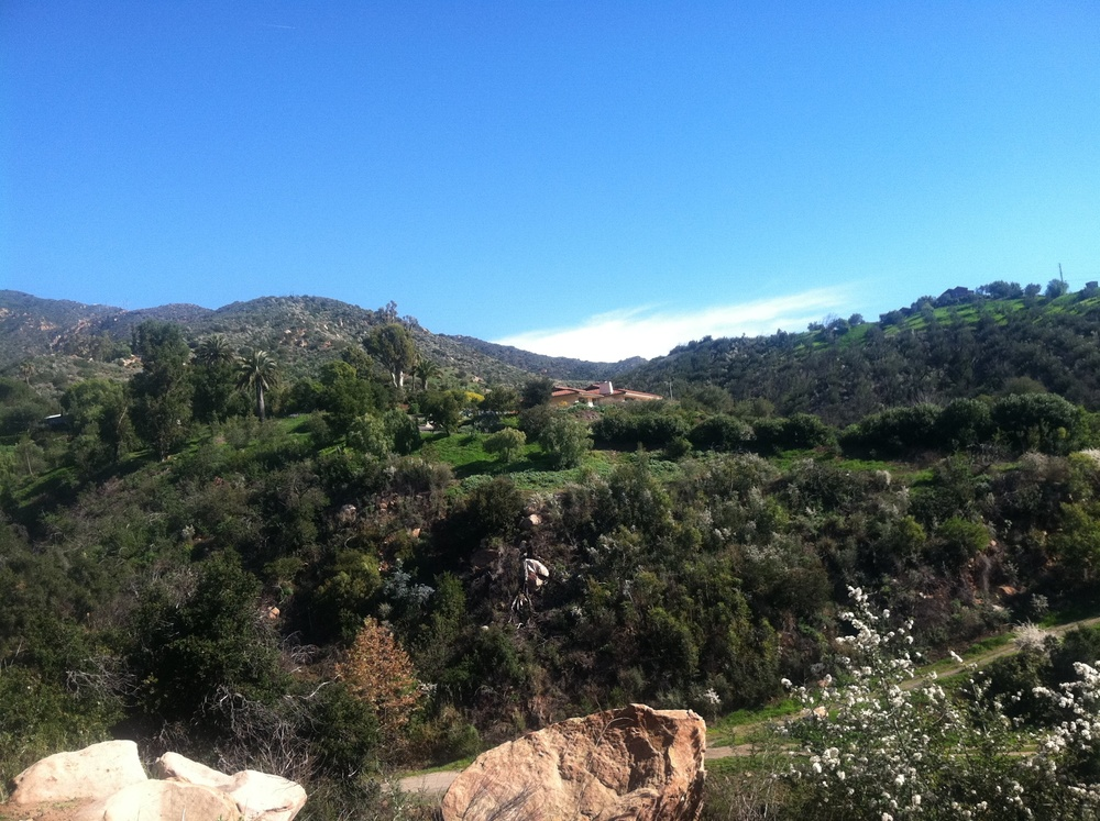 SB hillside.JPG