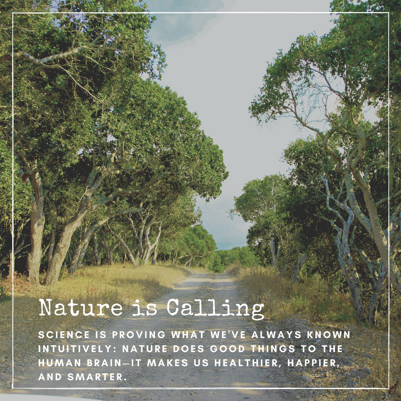 Nature is Callingpng Forest Bathing u2014 Walden