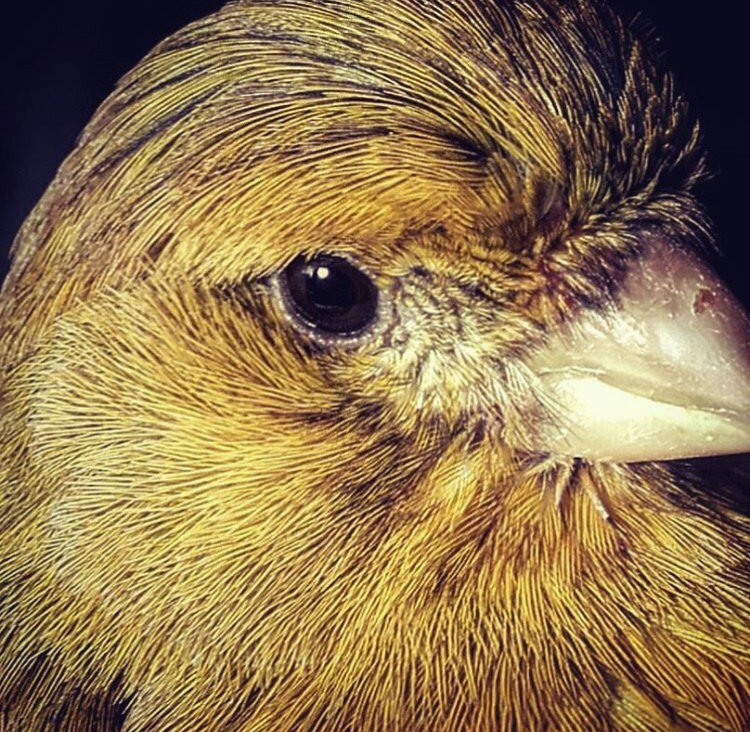 oyce-englander-levy-blog-canary.jpg