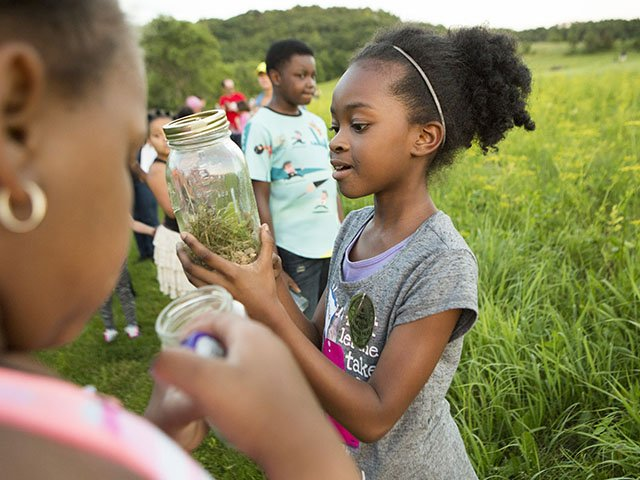 Ten-year-old Kashyia Smith (foreground) peers at fireflies she's captured at Indian Lake County Park, while Lyrick Hutson, 13, keeps watch for other beetles to catch. The health and wellness group Outdoors 123 brought the kids to the park.